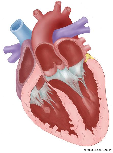 John Yesko: Medical illustrations by Chicago Certified ...